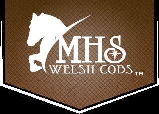 MHS Welsh Cobs